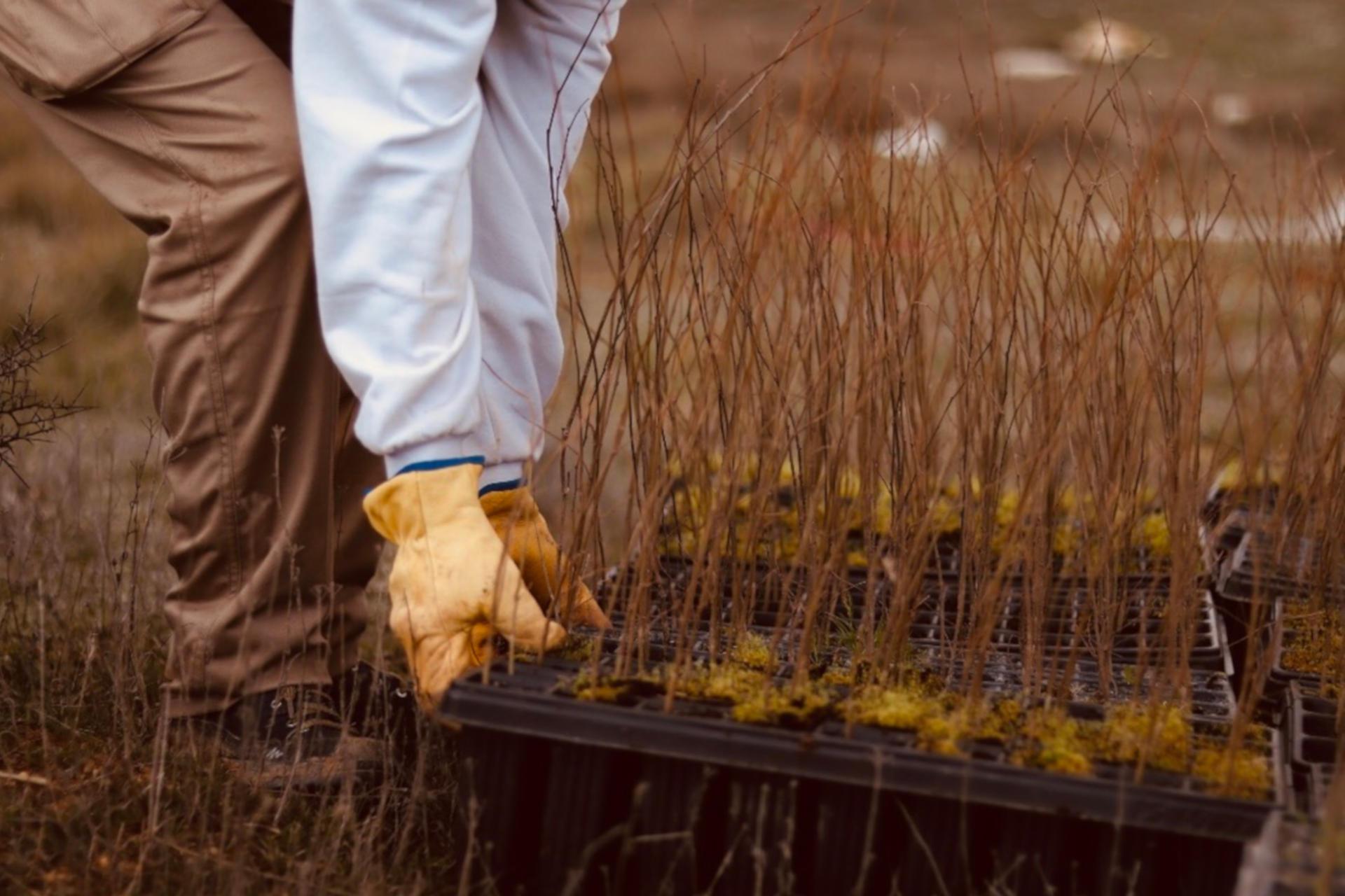 AXA planta bosque para contrarrestar emisiones de CO2 voluntariado corporativo